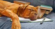 سگ بر آن آدمی شرف دارد ؛ متن کامل شعر سگ بر آن آدمی شرف دارد